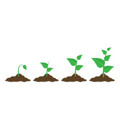 phases plant growing planting tree infographic in vector image