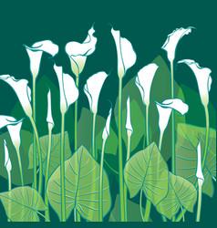 white calla lilies vector image