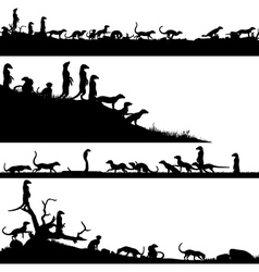 Meerkat foregrounds vector image vector image