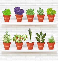 Organic gourmet collection of different herbs vector