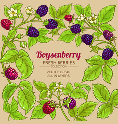 boysenberry branches frame on color vector image
