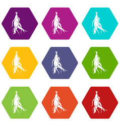 Ginseng panax root icon set color hexahedron vector