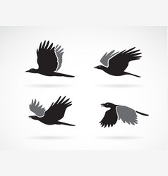 group black crow flying on white background vector image