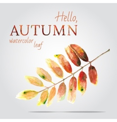 Watercolor painted leaf of a mountain ash vector image vector image