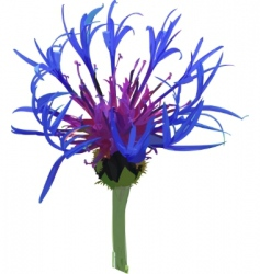 wild blue flower vector image