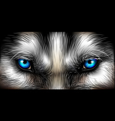 Big eyes siberian husky bright blue eyes close up vector