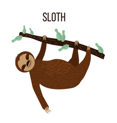 cute sloth hanging on a tree vector image