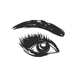 Eye and eyebrow sketch hand drawn vector