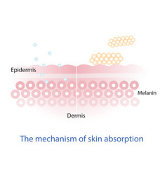 Mechanism of nutrient absorption through skin vector