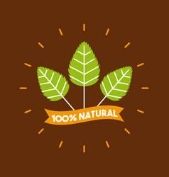 plant stevia natural sweetener vector image