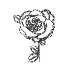 blurred silhouette sketch flowered rose with vector image