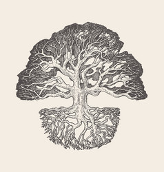 Old oak tree root system drawn vector