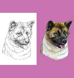 Portrait dog american akita vector