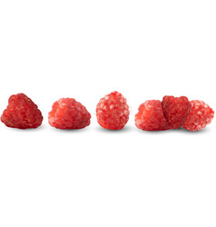 set of realistic raspberries isolated against a vector image