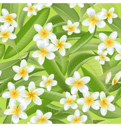 Tropical Leaves Background Tropical Flowers vector image vector image