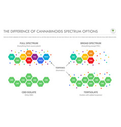 difference cannabinoids spectrum options vector image