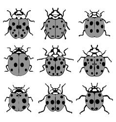 gray ladybugs vector image