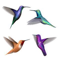 Hummingbirds exotic little colored beautiful vector