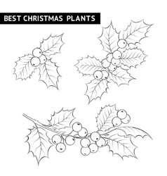 Christmas mistletoe branch drawing vector image