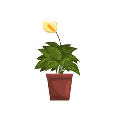 spathiphyllum indoor house plant in brown pot vector image vector image