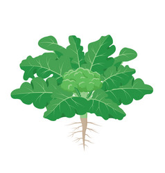 Broccoli plant with the ripe broccoli fruit among vector