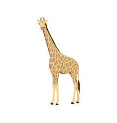 icon african giraffe vector image