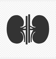 kidney human renal icon isolated vector image