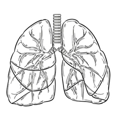 Lungs sketch vector