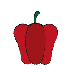 pepper vegetable icon vector image