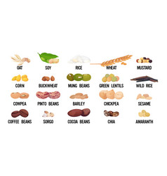 Set seeds beans and grains organic healthy vector