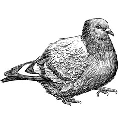 Striding pigeon vector