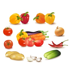 colorful group of vegetables vector image
