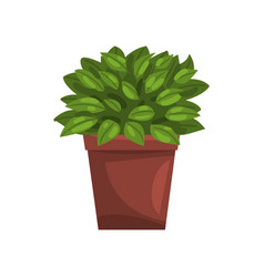 philodendron indoor house plant in brown pot vector image