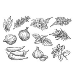 Aromatic herb and spice hand drawn ink sketch set vector
