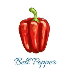 Bell pepper vegetable isolated sketch icon vector