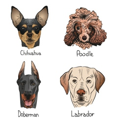 Drawing dog icons vector