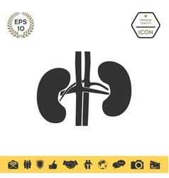 human organs kidney icon vector image