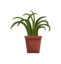Aloe indoor house plant in brown pot element for vector