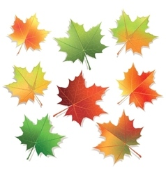 Colorful maple leaves isolated on white background vector image