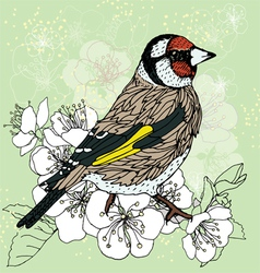 goldfinch at cherry blossoms vector image