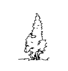 Hand drawn sketch thuja architect tree vector