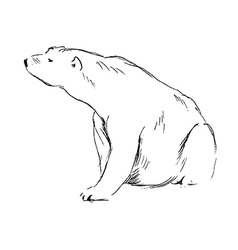 Hand sketch sitting polar bear vector