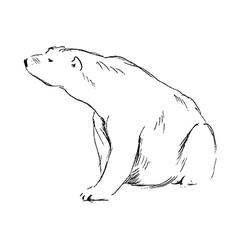 Hand sketch sitting polar bear vector