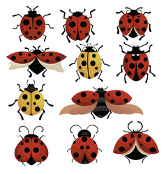 Set ladybirds collection cartoon insects vector