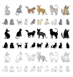 Breeds of cats cartoon icons in set collection for vector