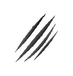 Claw scratch animal scratch vector