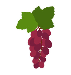 design of a grape in flat style image vector image