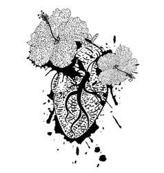 hibiscus flowers and heart vector image
