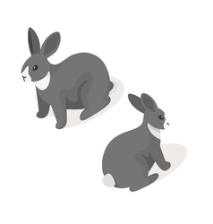 Isometric 3d of grey rabbit vector image