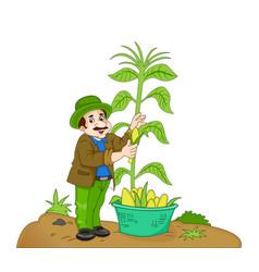 Man harvesting corn vector